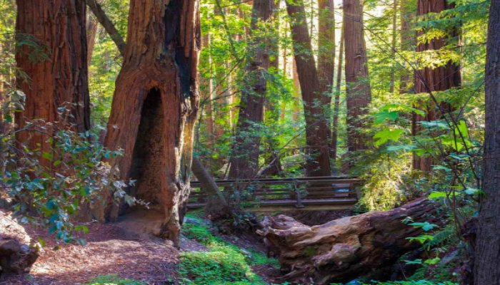 Pacific-Coast-Highway-Big-Sur-Redwood-Park