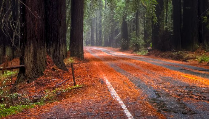 Pacific-Coast-Highway-Navarro-River-Redwoods-128