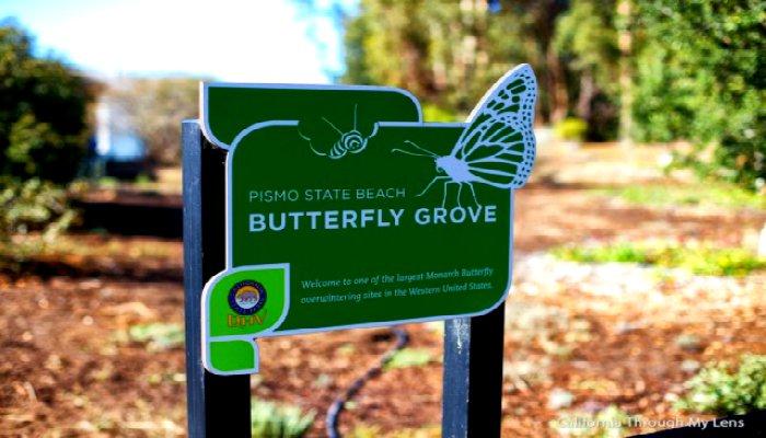 Pacific-Coast-Highway-Pismo-Beach-Monarch-Butterflies