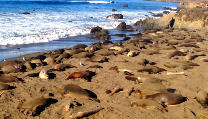 Pacific-Coast-Highway-Seal-Beach