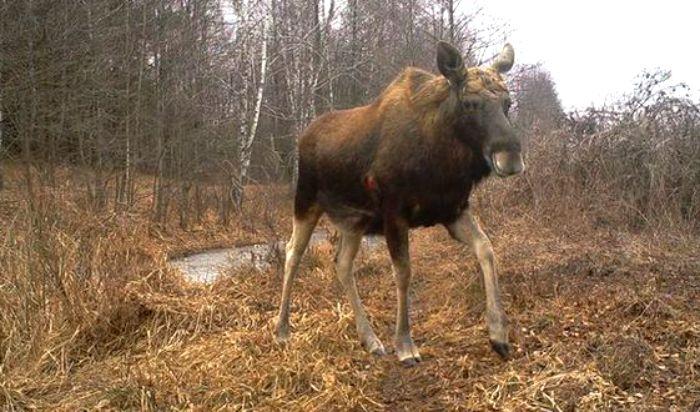 Stop-Poaching-Moose-in-Czech-Republic-Bohemia