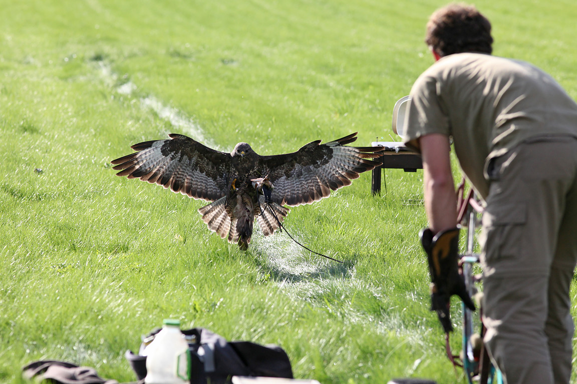 Czech-Falconry-Birds-Hunting-Bohemian-Photo-126