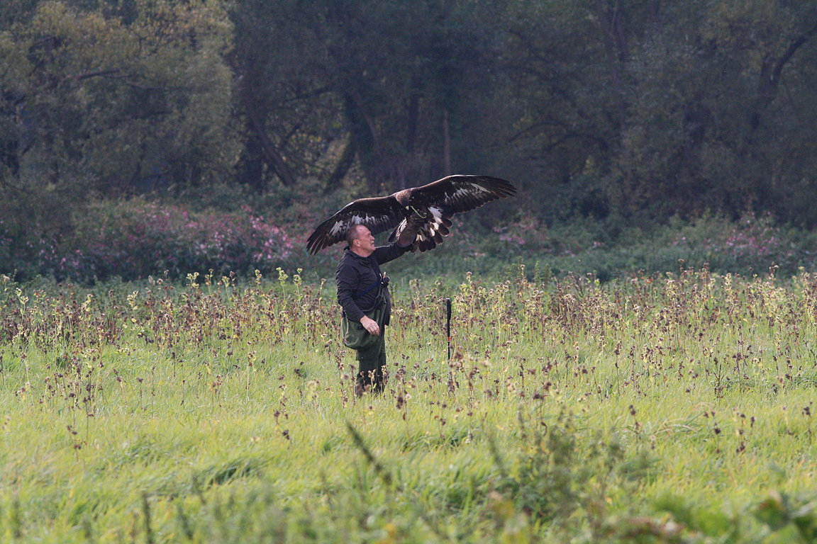Czech-Falconry-Birds-Hunting-Bohemian-Photo-17