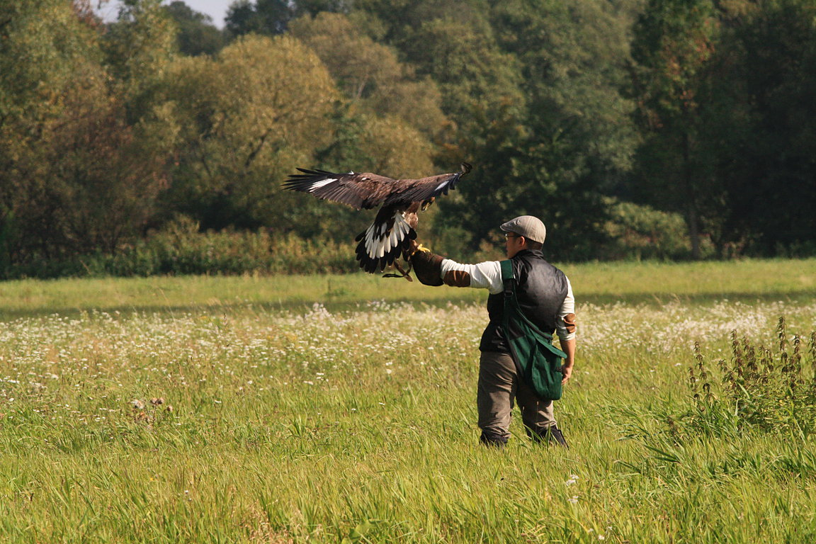 Czech-Falconry-Birds-Hunting-Bohemian-Photo-18