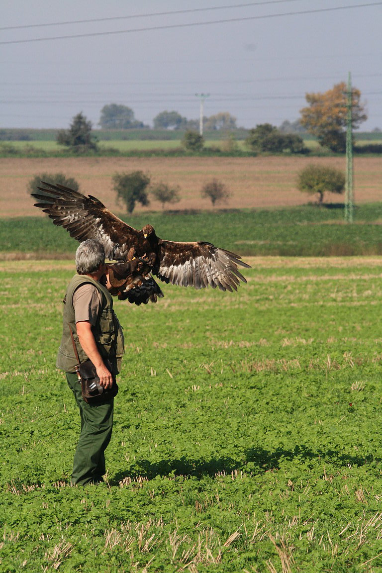 Czech-Falconry-Birds-Hunting-Bohemian-Photo-2