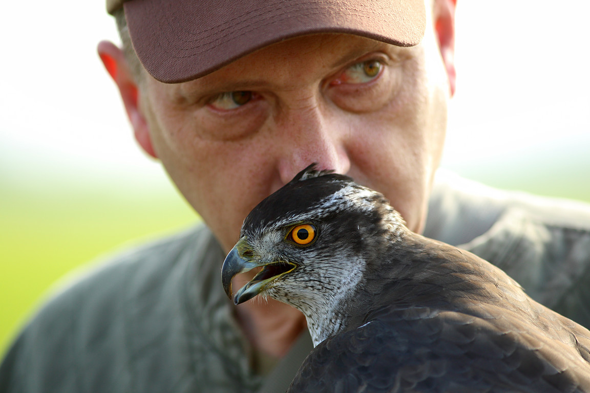 Czech-Falconry-Birds-Hunting-Bohemian-Photo-29