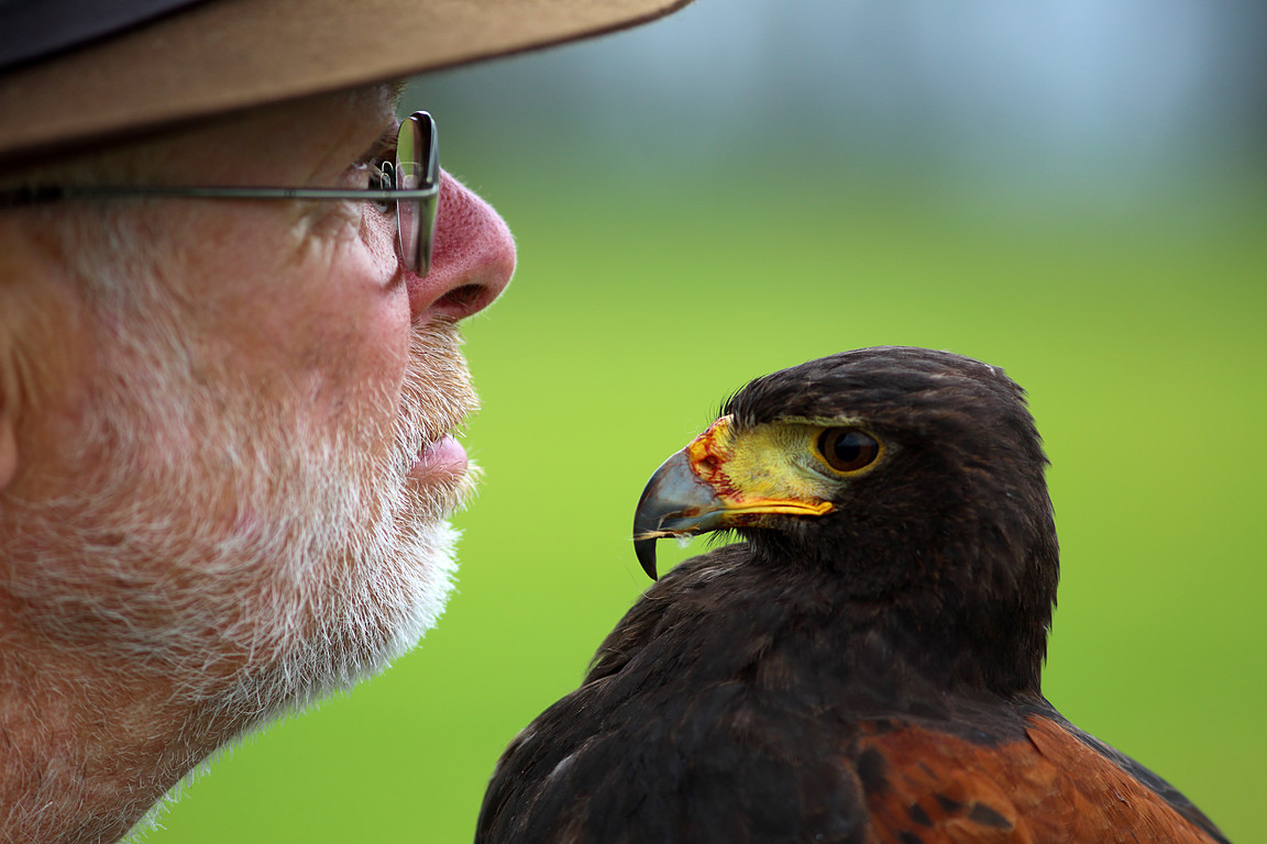 Czech-Falconry-Birds-Hunting-Bohemian-Photo-39