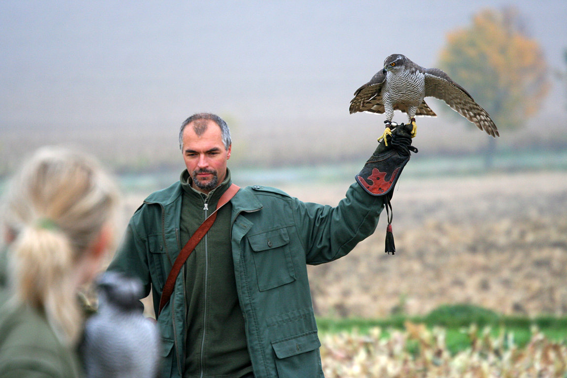 Czech-Falconry-Birds-Hunting-Bohemian-Photo-99