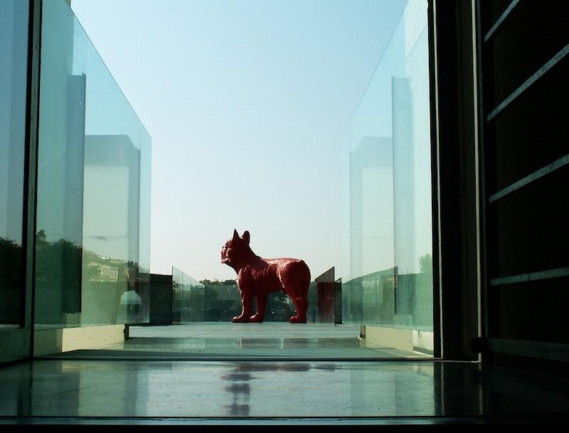 Dog-Tres-Bohemes-min