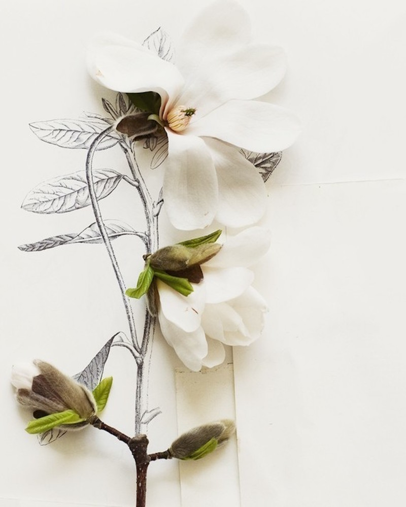 Magnolias-Tres-Bohemes