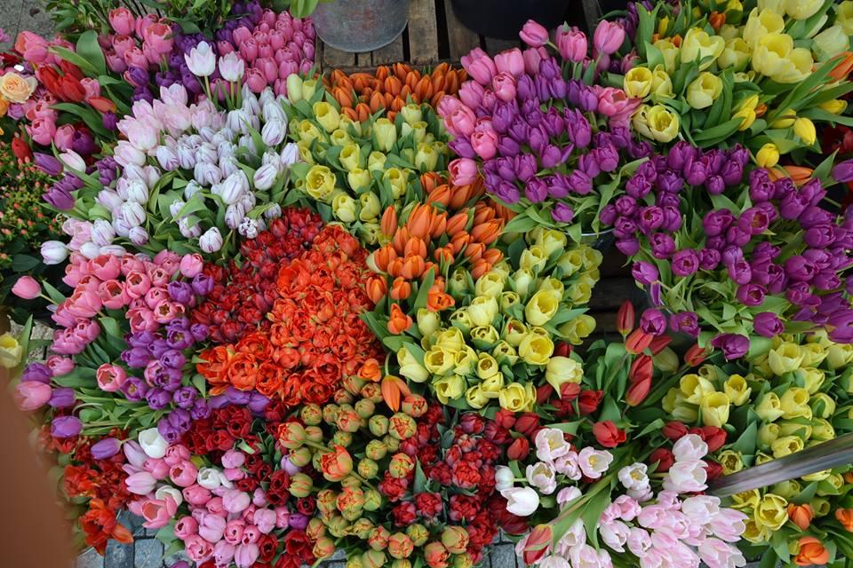 Farmers-Market-Prague-Flowers-11