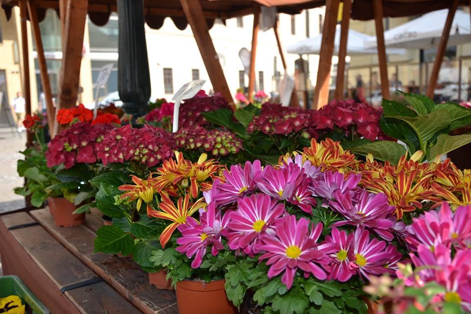 Farmers-Market-Prague-Flowers-12