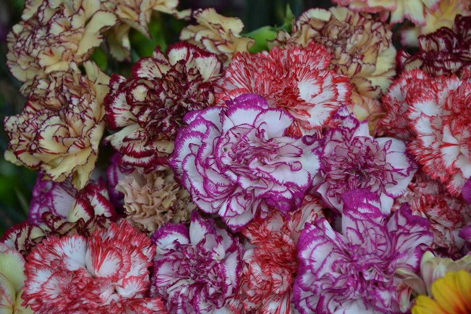 Farmers-Market-Prague-Flowers-5
