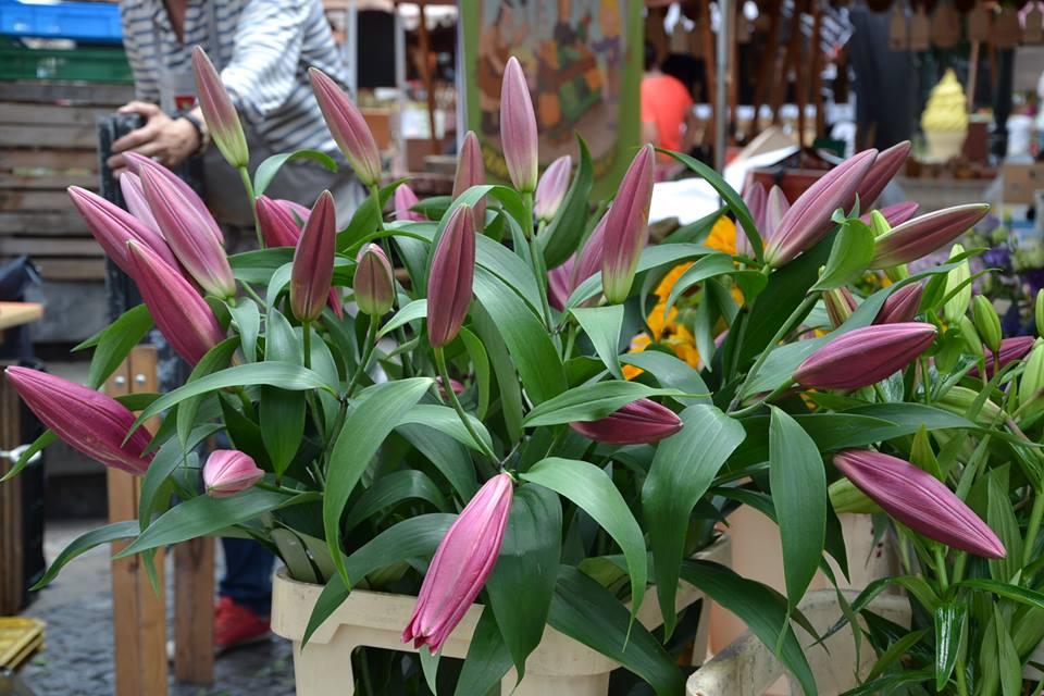 Farmers-Market-Prague-Flowers-7
