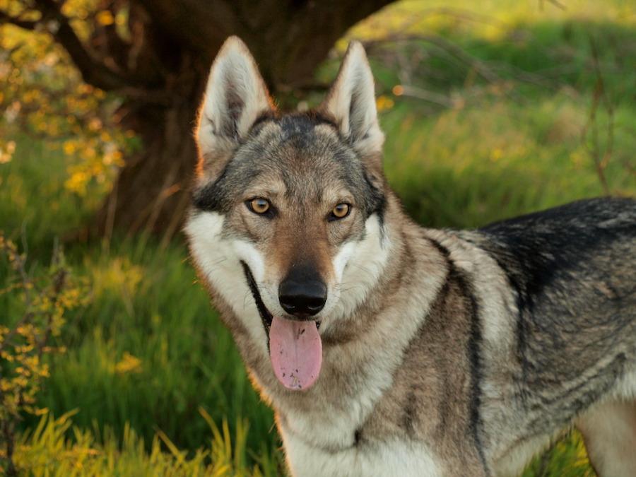 Dog-Park-Tres-Bohemes