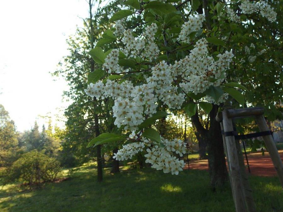Flowers-Tres-Bohemes