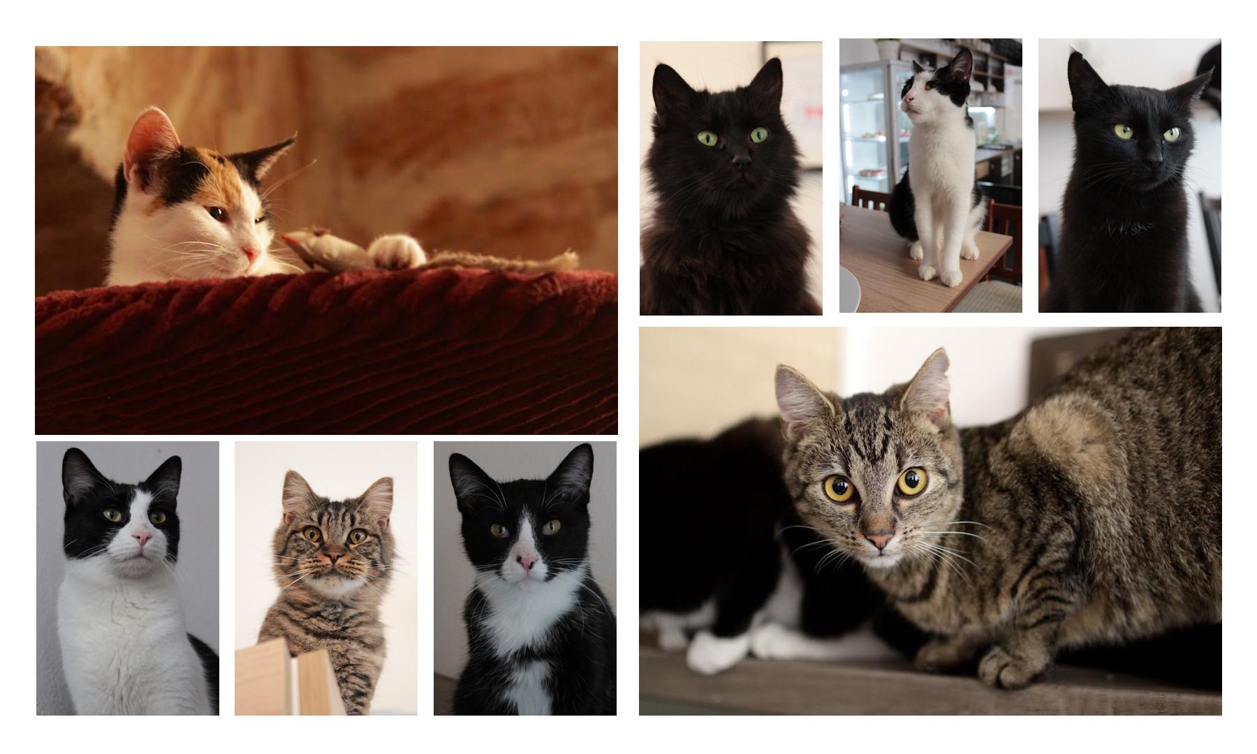 cats-tres-bohemes