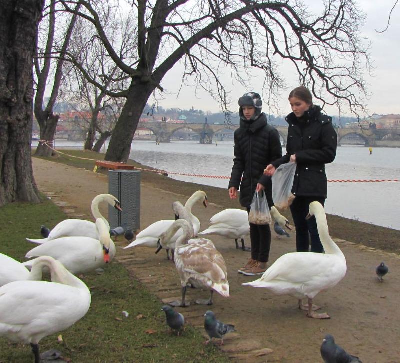 tres-bohemes-feeding-swans-2