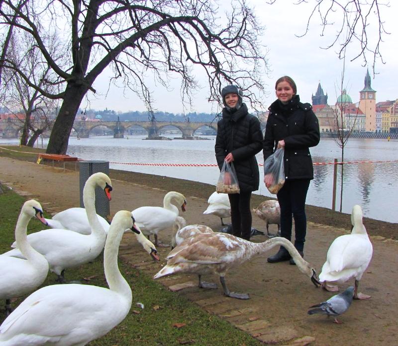 tres-bohemes-feeding-swans