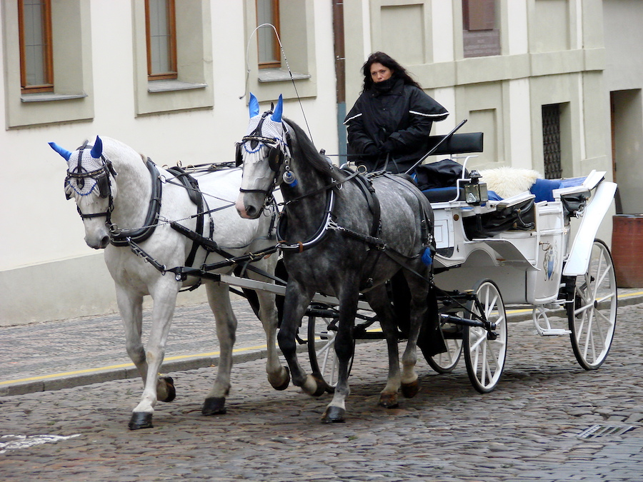 horse-drawn-carriage-prague-tres-bohemes-4