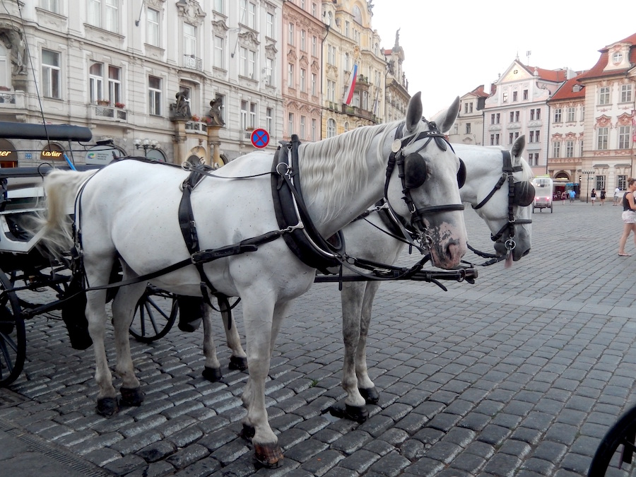 horse-drawn-carriage-prague-tres-bohemes-5