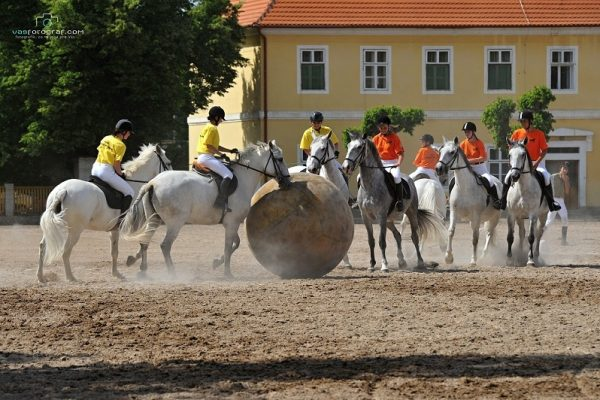 Kladruber_Czech_Horse_TresBohemes