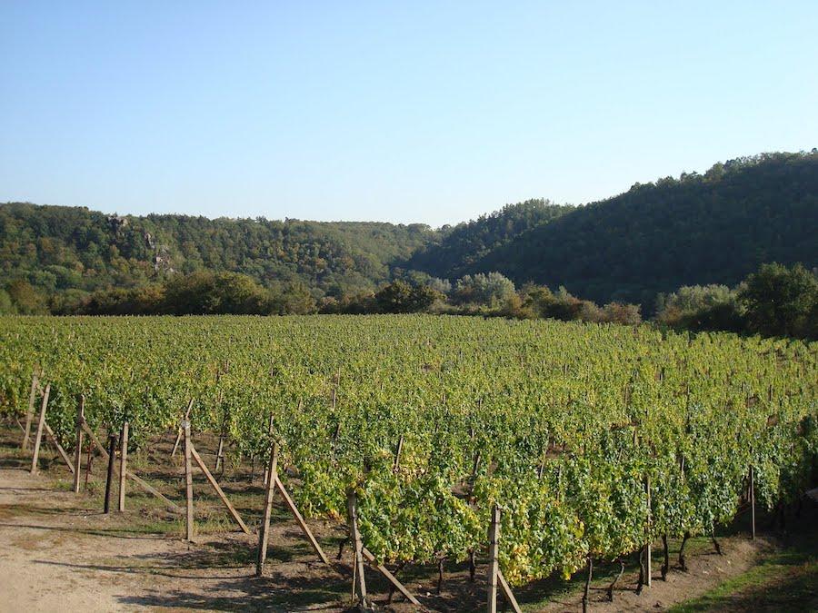 Znojmo-Vineyard-Tres-Bohemes